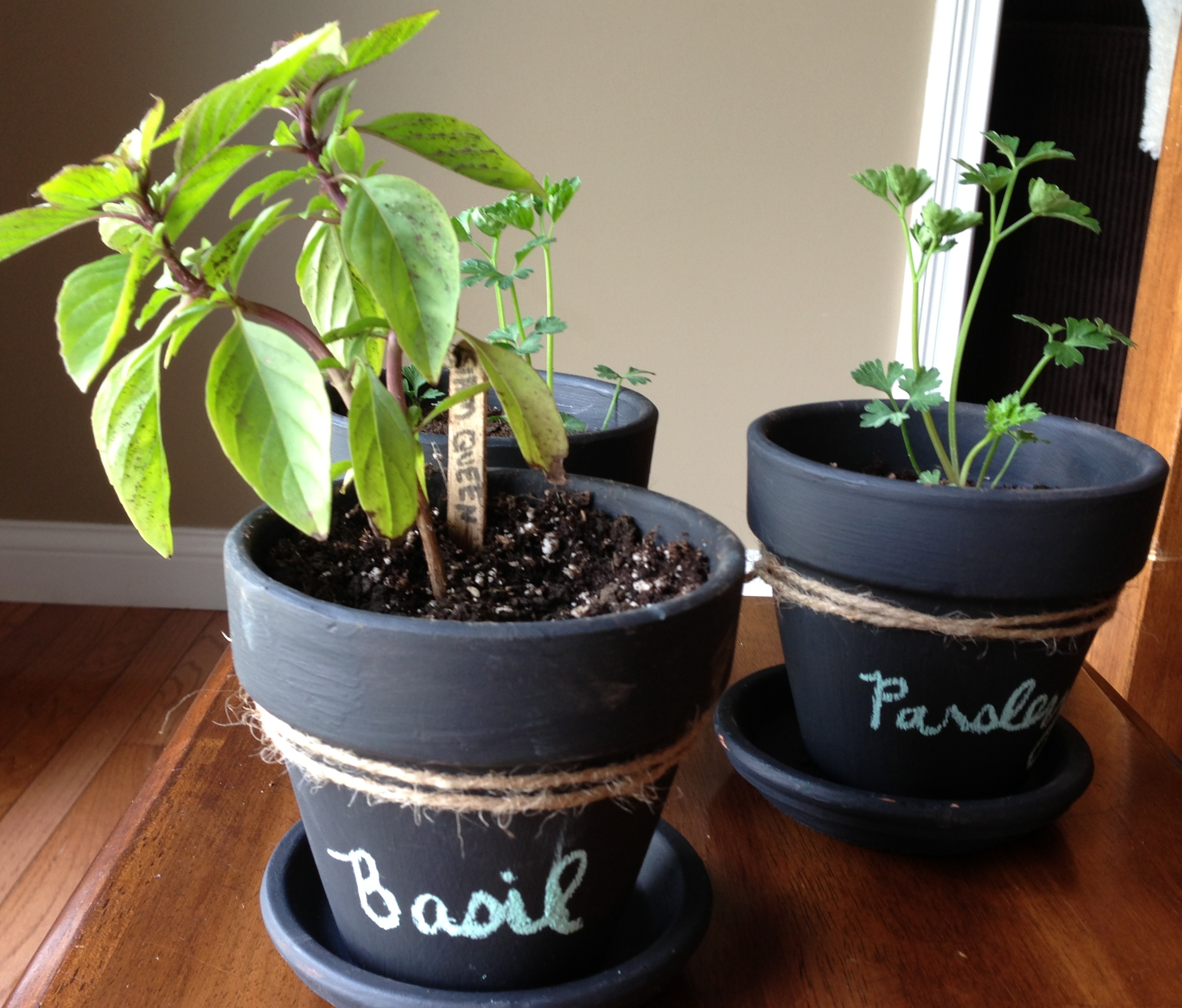 Wellness Inspired Gift Idea: Chalkboard Potted Plants & Herbs ...